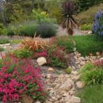 ask-a-master-gardener